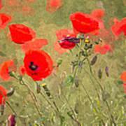 Poppies Viii Art Print