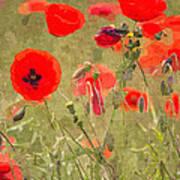 Poppies X Art Print