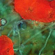 Poppy 30 Art Print