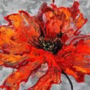 Poppy 41 Art Print