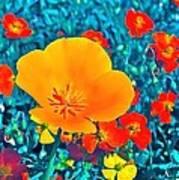 Poppy 7 Art Print