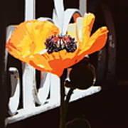 Poppy Art Poster Print Art Print
