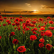 Poppy Field At Sunset Art Print
