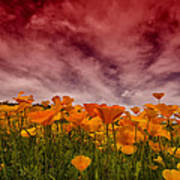 Poppy Fields Forever Art Print