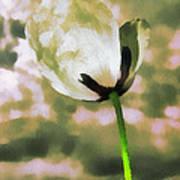 Poppy Flower In The Sky  Art Print