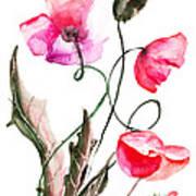 Poppy Flowers Art Print