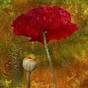 Poppy II Art Print