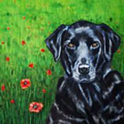 Poppy - Labrador Dog In Poppy Flower Field Art Print