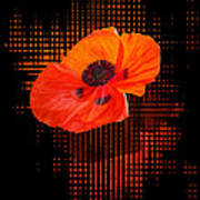 Poppy Passion Art Print