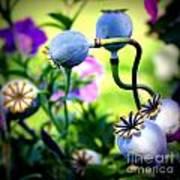 Poppy Pods And Curvy Stems. Art Print