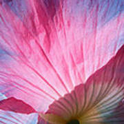 Poppy Rays Collage Art Print