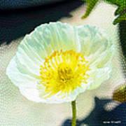 Poppy Series - Beside The Sidewalk Art Print