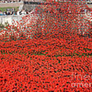 Poppy Tribute Of The Century. Art Print