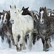 Populations Of Horses Art Print