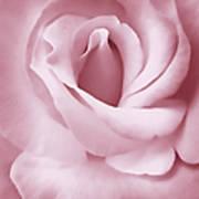 Porcelain Pink Rose Flower Art Print