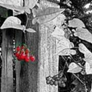 Porch Post Berries Color Punch Art Print