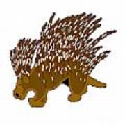 Porcupine Art Print