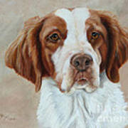 Portrait Of A Brittany Spaniel Art Print