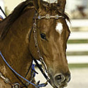 Portrait Of A Brown Horse Art Print