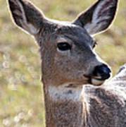 Portrait Of A Deer Art Print
