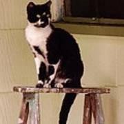 Portrait Of A Painted Cat Art Print