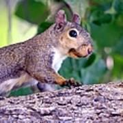 Portrait Of A Squirrel Art Print