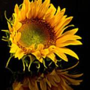 Portrait Of A Sunflower Art Print