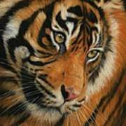 Portrait Of A Tiger Art Print by David Stribbling