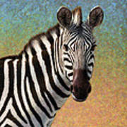 Portrait Of A Zebra - Square Art Print