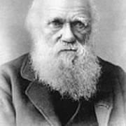 Portrait Of Charles Darwin Art Print