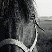 Portrait Of Horse In Black And White Art Print