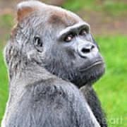 Portrait Of King Kongs Cousin II Art Print