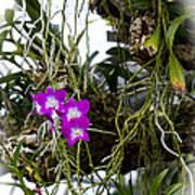 Portrait Of Orchids Art Print