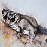 Possum Cute Sugar Glider Art Print