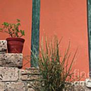 Pot Plants Art Print