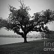 Potomac Tree Art Print