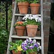Potted Flower On Ladder Art Print
