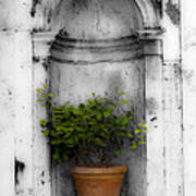 Potted Plant At Villa D'este Near Rome Italy Art Print