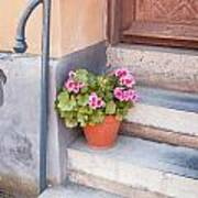 Potted Plant Front Of House Art Print