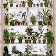 Potted Plants On Shelves Art Print