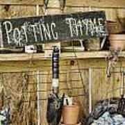Potting Thyme Art Print