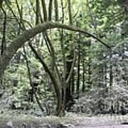 pr 136 - Bowed Tree Art Print