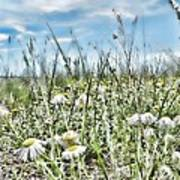 Prairie Flowers And Grasses Art Print