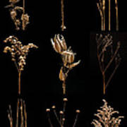 Prairie Plant Still Life Art Print
