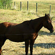 Prarie Stallion In The Shade Art Print by Barbara Griffin