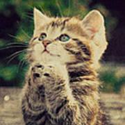 Praying Cat Art Print