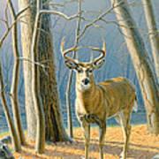 Pre-flight- Whitetail Buck Art Print by Paul Krapf