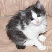 Precious Kitten Art Print