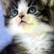 Precious Kitty Art Print