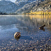 Preening Ducks At Silver Lake Art Print